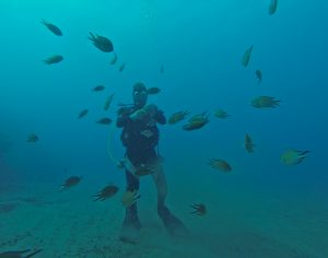diving amadores underwater world feeling fish